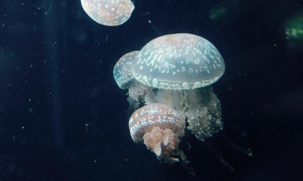 大洗水族館 クラゲ