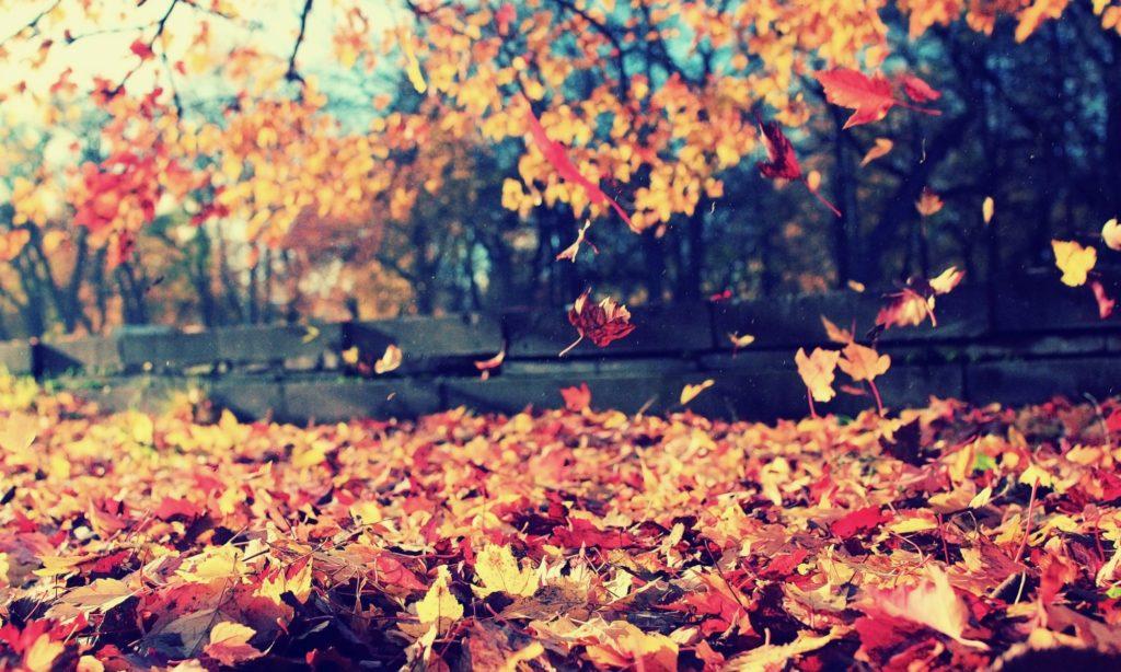 秋の社員旅行におすすめ