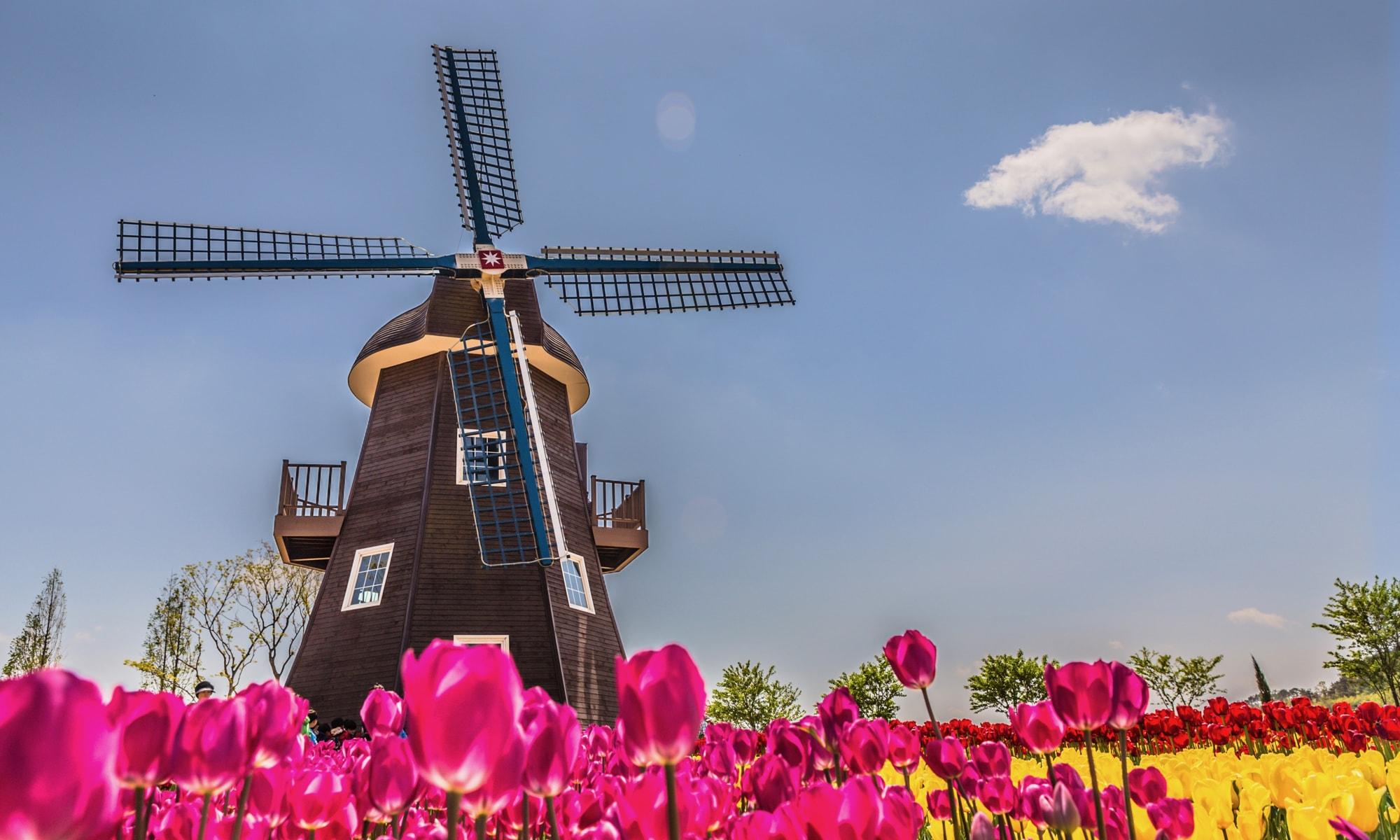 オランダ 文化