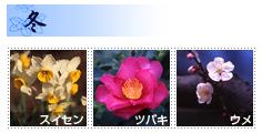三渓園 季節の花