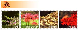 三渓園 秋の花
