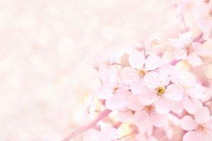 春 食べ物