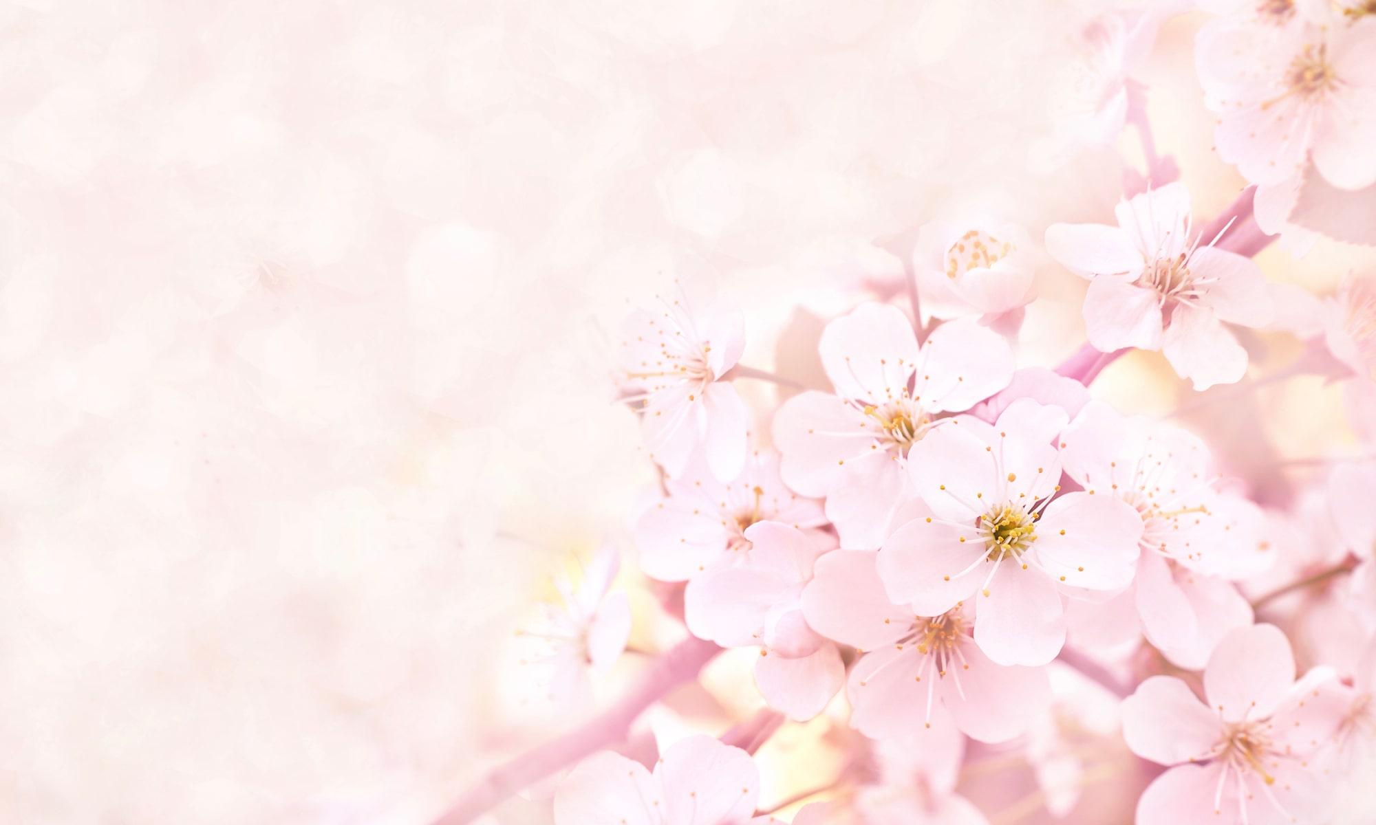 春を感じる旬な食べ物特集!寒い...